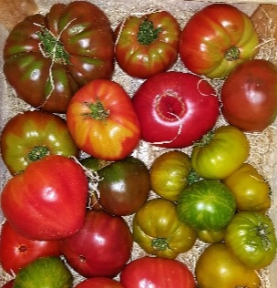 tomates_anciennes3