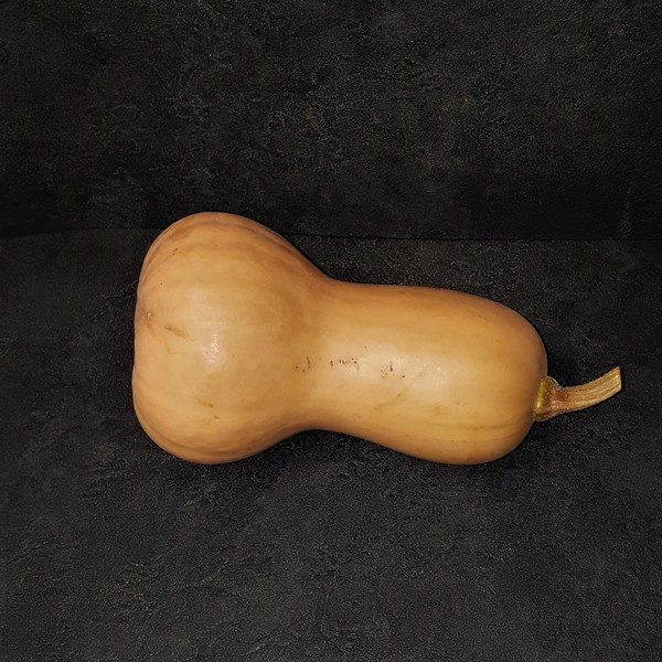 courge_butternut