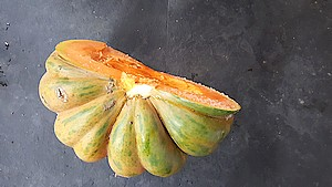 courge musquée2
