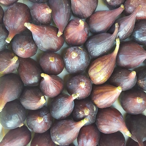 figues3
