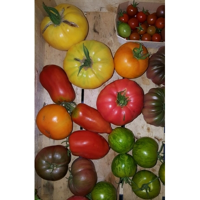 tomates_anciennes