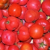 tomate_ronde
