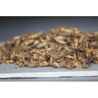Larves de mouche soldat 1 kg