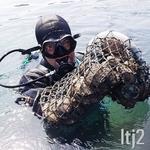 ormeau en plongée