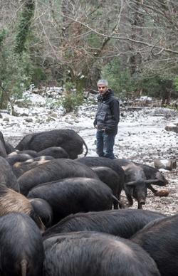 L' eleveur Corse et ses cochons www.luxfood-shop.fr