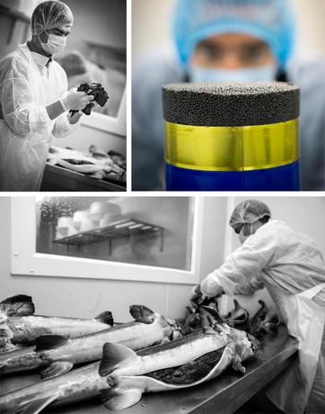 L' excellence du caviar français www.luxfood-shop.fr