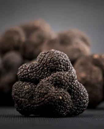 Truffe noire www.luxfood-shop.fr
