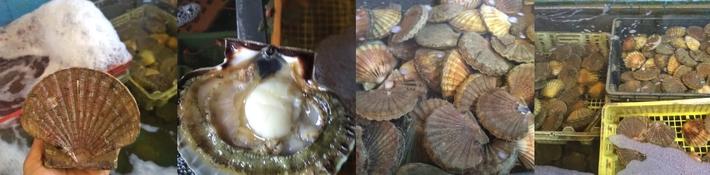 Coquilles Saint Jacques de Saint Malo www.luxfood-shop.fr