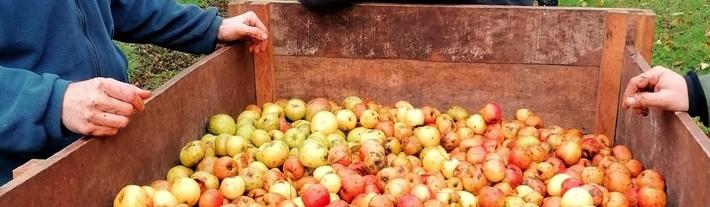 Les pommes du contentin www.luxfood-shop.fr
