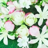 BB111P rose