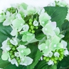 BB110G vert-blanc