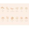 flower-chart-fr-800x600_1