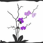 Orchidee-a-empreintes