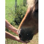 tatouage-merveille-chevaux
