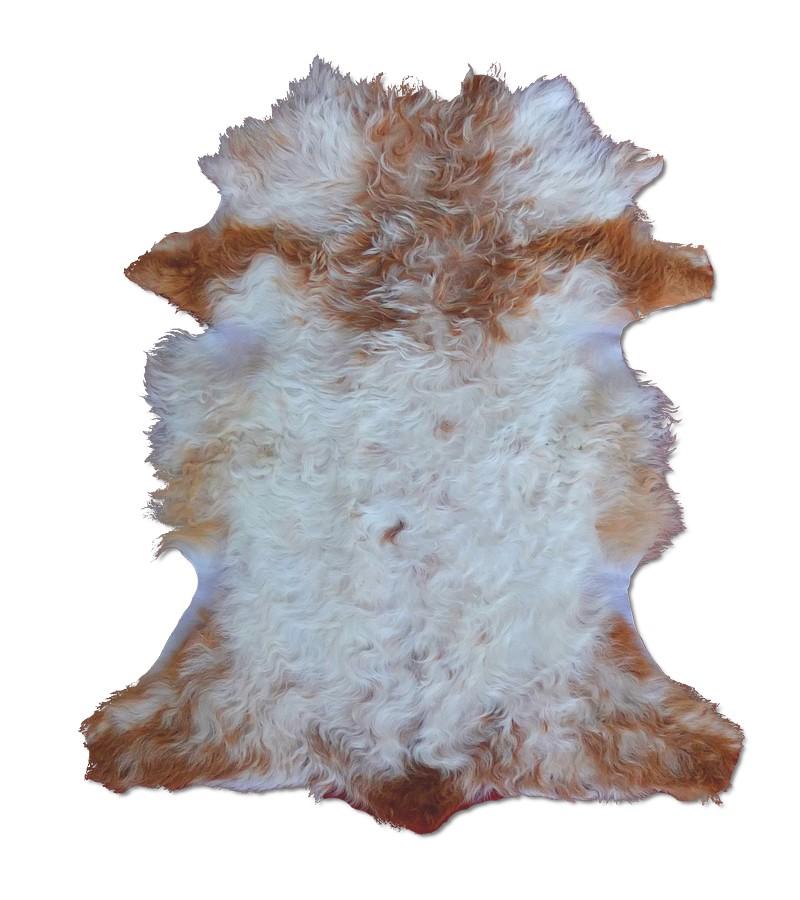 agneau-marron-et-blanc2
