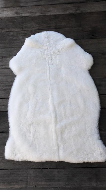 mouton blanc rase