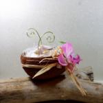porte alliances noix de coco mariage exotique coquillages