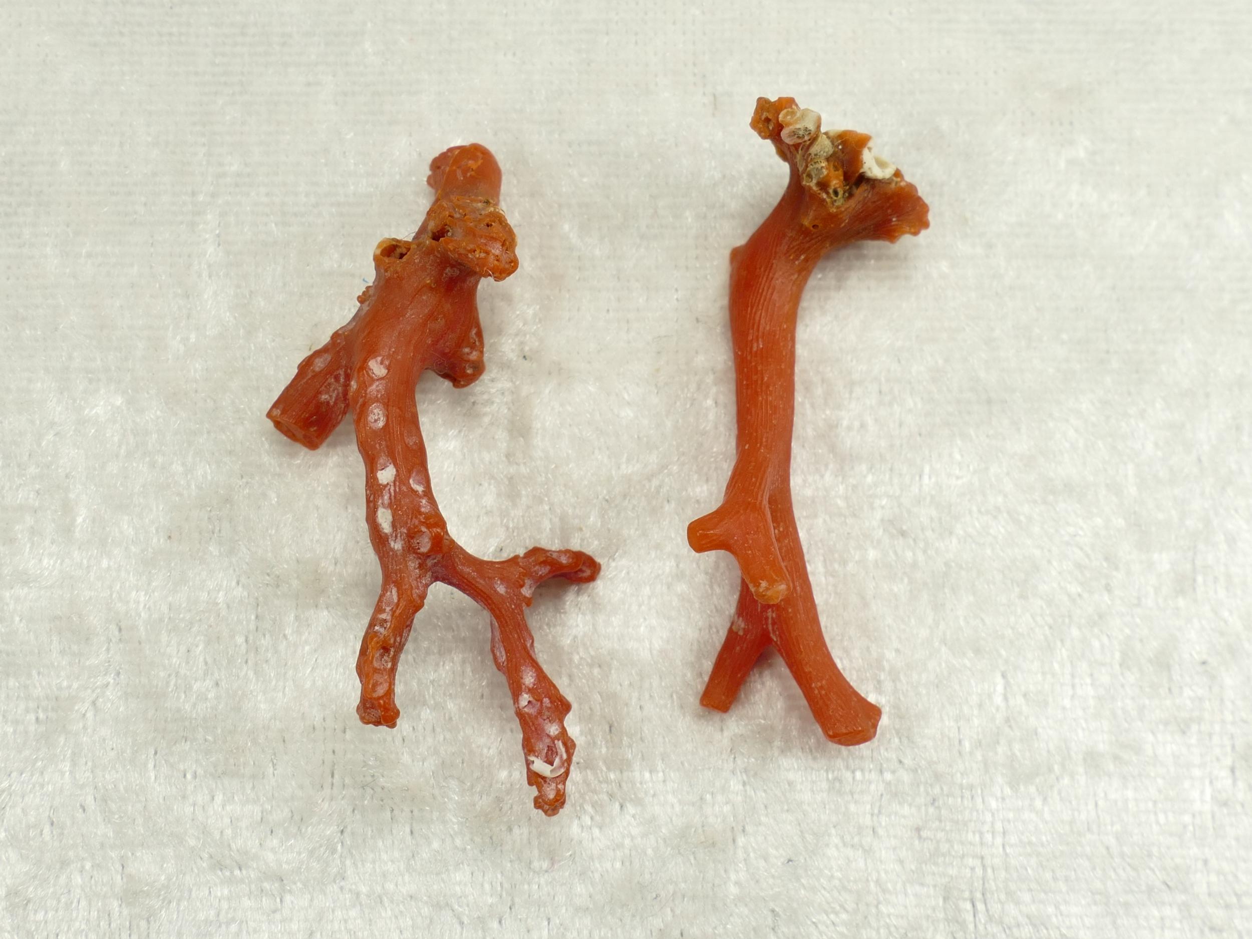 2 Spécimens de Corail rouge brut naturel du Maroc 5.09g (#PK267)