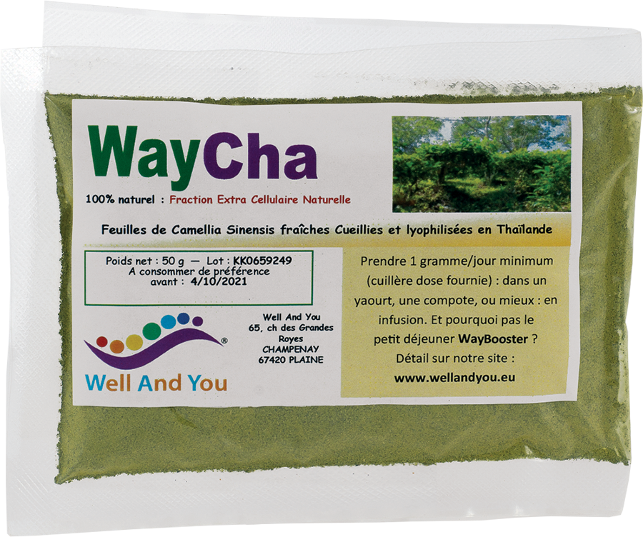 WayCha
