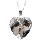 5_019-nouveau-joli-chaton-mignon-bebe-pet_variants-4