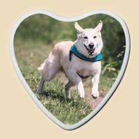 Médaillon Photo Porcelaine Cœur pour animaux