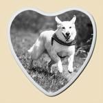 photo-ceramique-chien