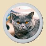 medaillon-porcelaine-photo-chat