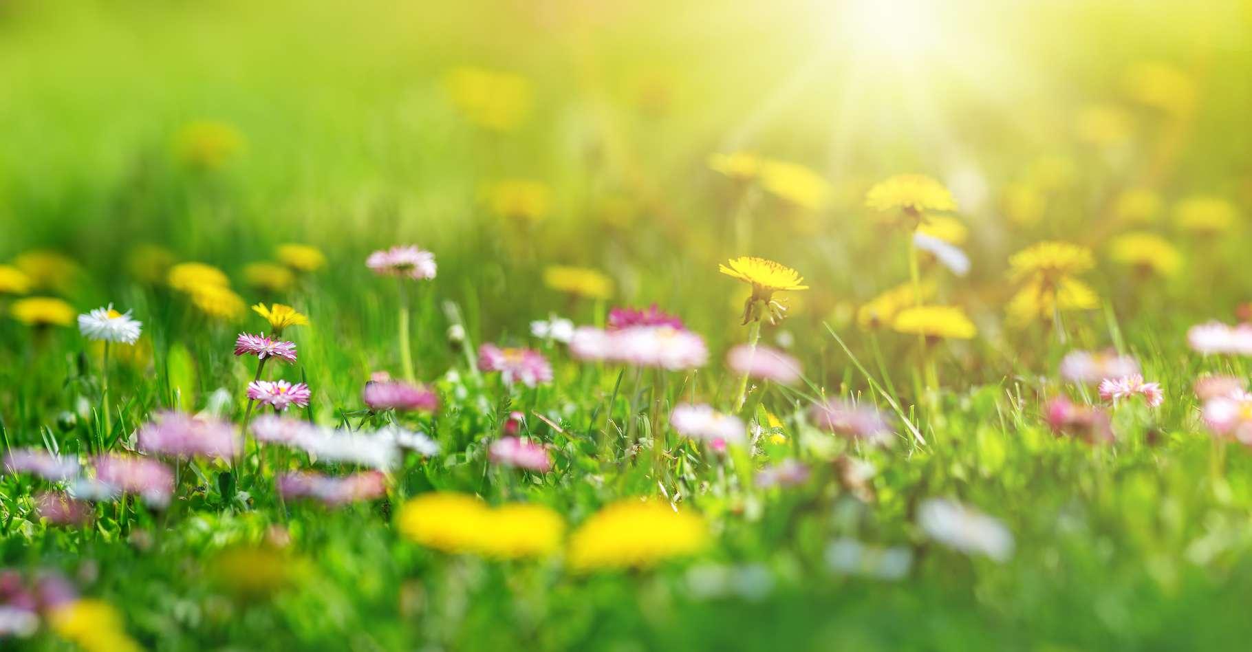 5c83afa3a4 50161489 equinoxe printemps tot