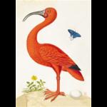 Cahier muséum Ibis orange A5 48 PAGES