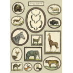 AFFICHE HISTOIRE NATURELLE ANIMAUX