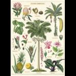 AFFICHE PLANTES TROPICALES