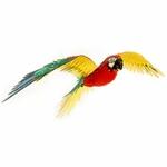 0002807_premium-series-parrot