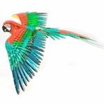 0002805_premium-series-parrot