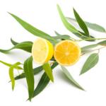 Huile essentielle bio eucalyptus citronnée