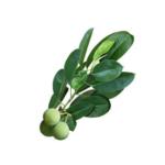 huile végétale de calophylle inophyle 100 ml