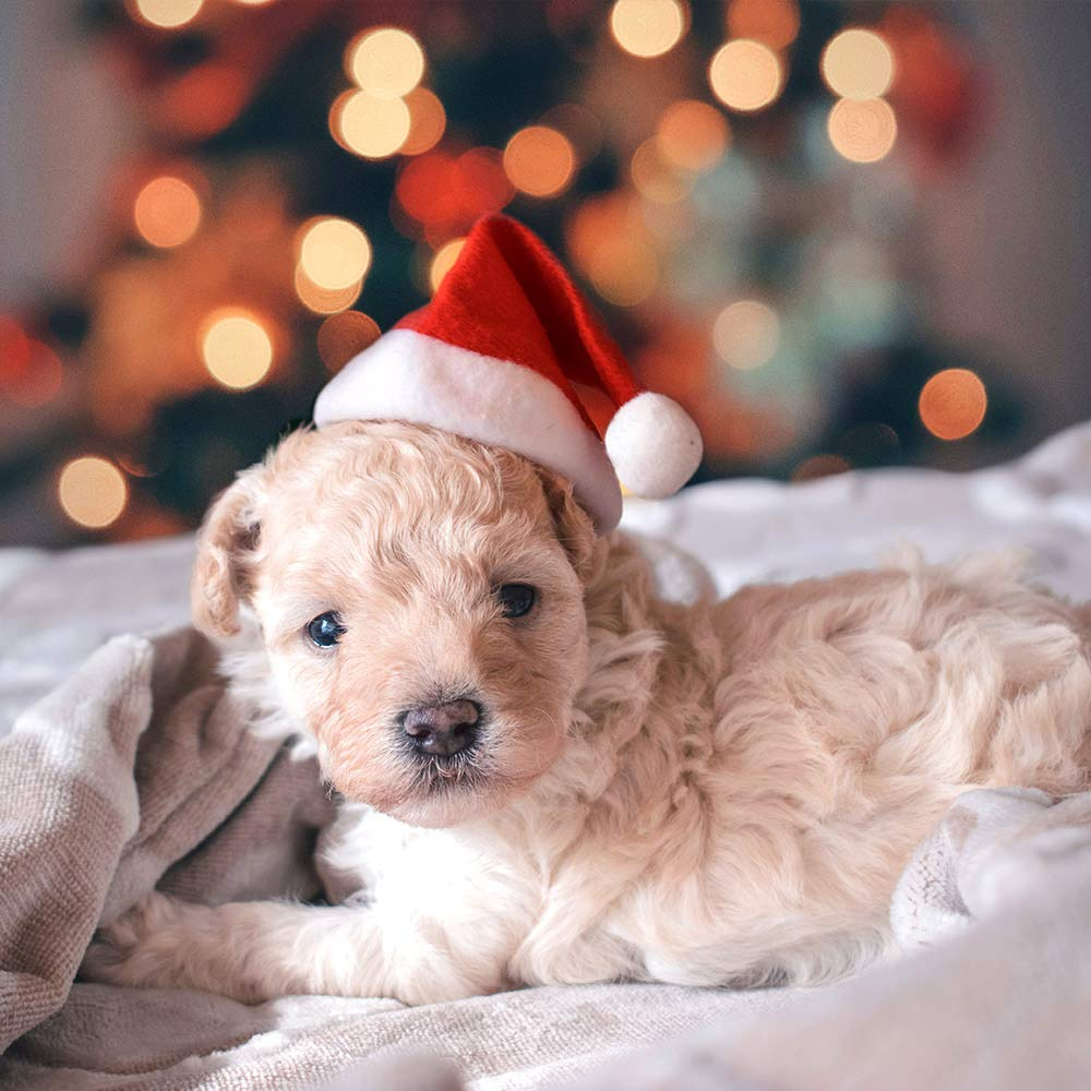 Bonnet de Noel pour chien ou chat