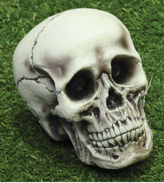 Crâne de squelette