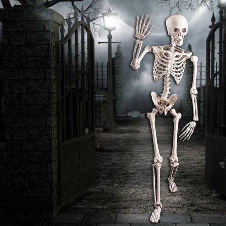 Squelette Géant 160 Cm
