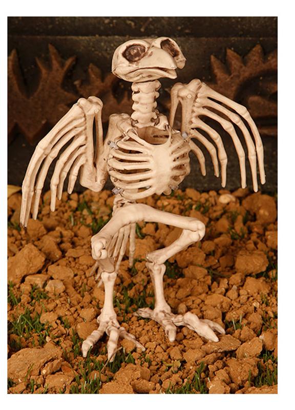 Squelette d\'oiseau