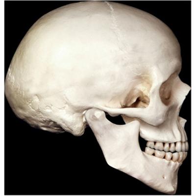 Décor crânes en carton