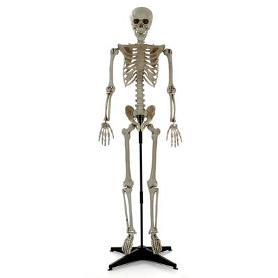 Squelette sur pied
