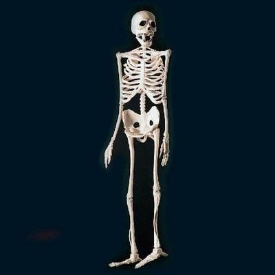 Squelette Plastique 60 Cm