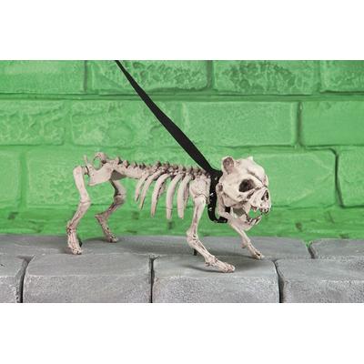 Chien squelette bouledogue