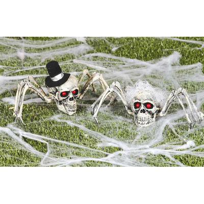 Araignée tête de mort