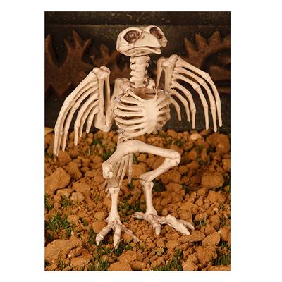 Squelette d'oiseau