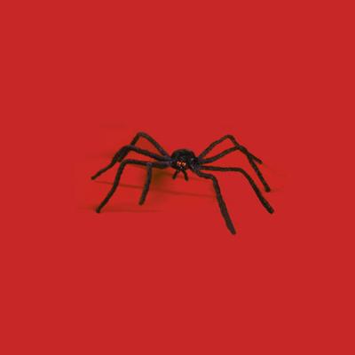 Araignée 25 cm d'envergure
