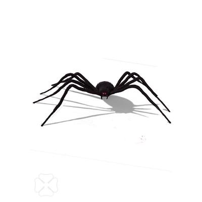 Araignée 1 mètre