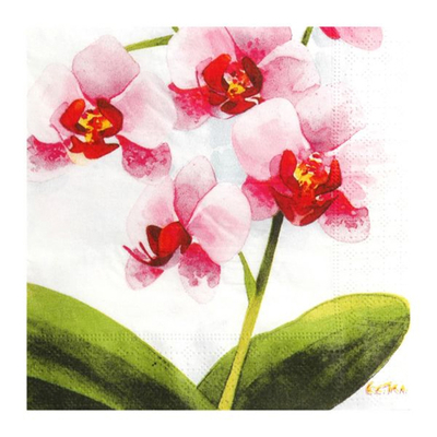 20 Serviettes Jetables Orchidées