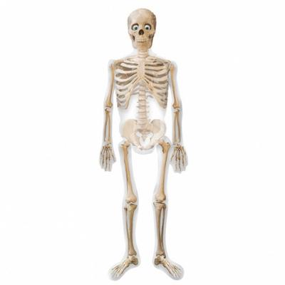 Ballon mylar squelette 190cm
