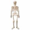 22888-ballon-halloween-squelette-z